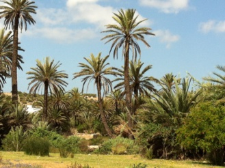 L 'oasis